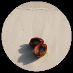 CoconutCircle