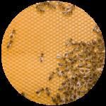 honeyCircle